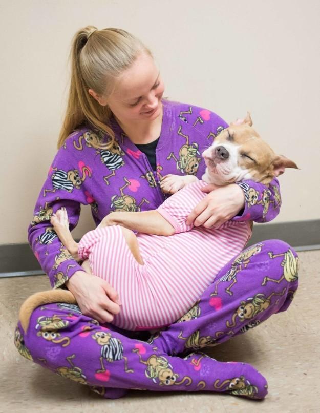Shelter dog in pjs image